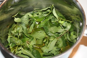Making an herb infusion